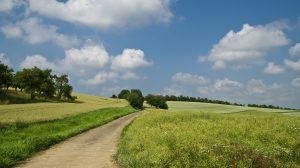 calm countryside